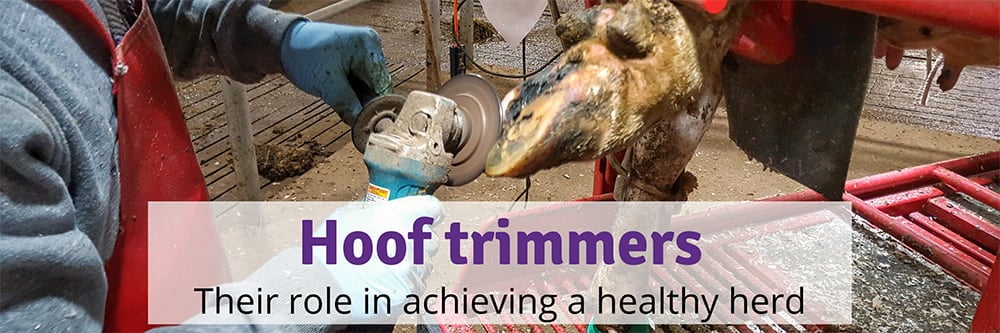 Where to Find a Hoof Trimmer