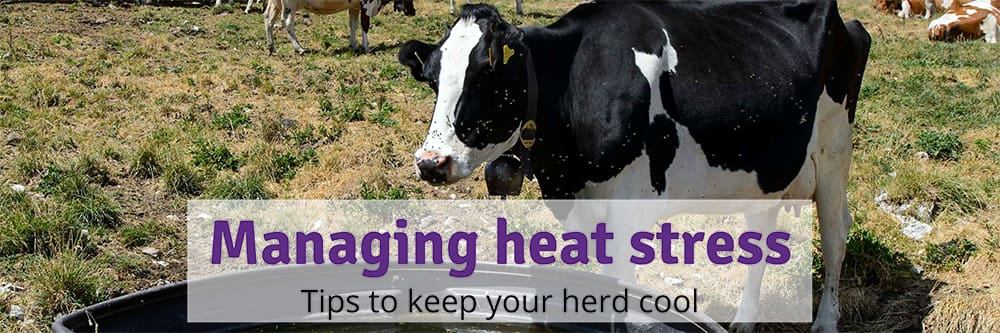 Managing heat stress