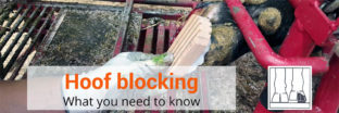 Hoof blocking: what you need to know
