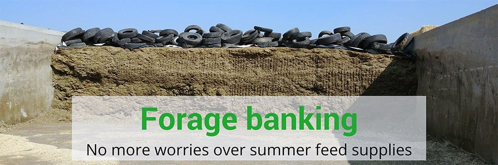 Forage banking: no worries over summer feed supplies