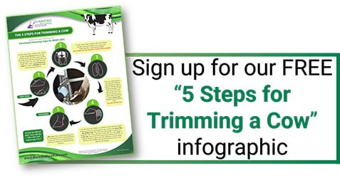 5 Steps Hoof Trimming Infographic