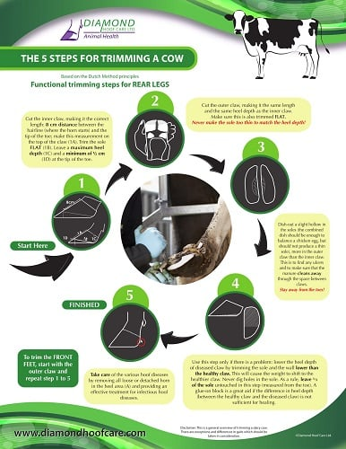 Hoof Trimming Infographic