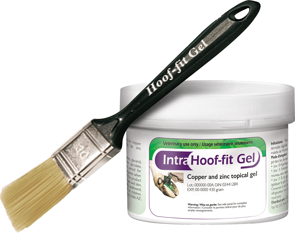 Hoof Care eBook